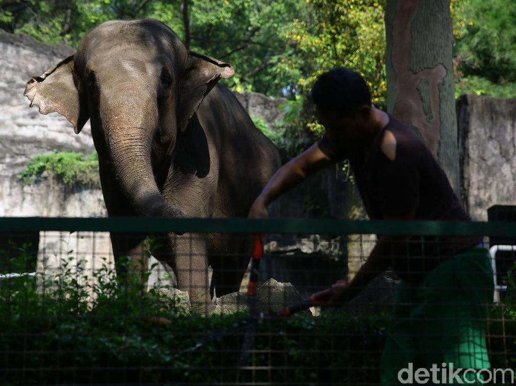 Pandemi Corona Bikin Satwa Medan Zoo Terancam Kelaparan