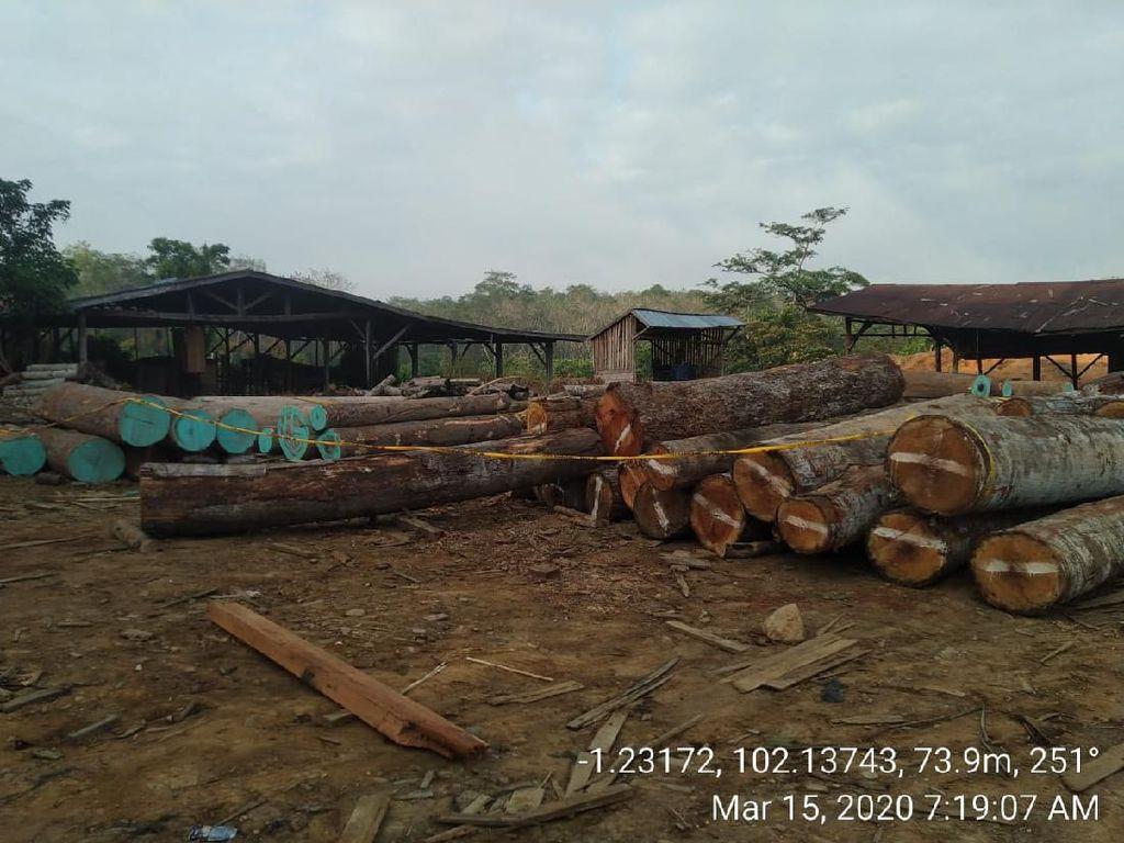 KLHK Tangkap 7 Pelaku Illegal Logging di Sumsel dan Jambi, Cukong Dikejar