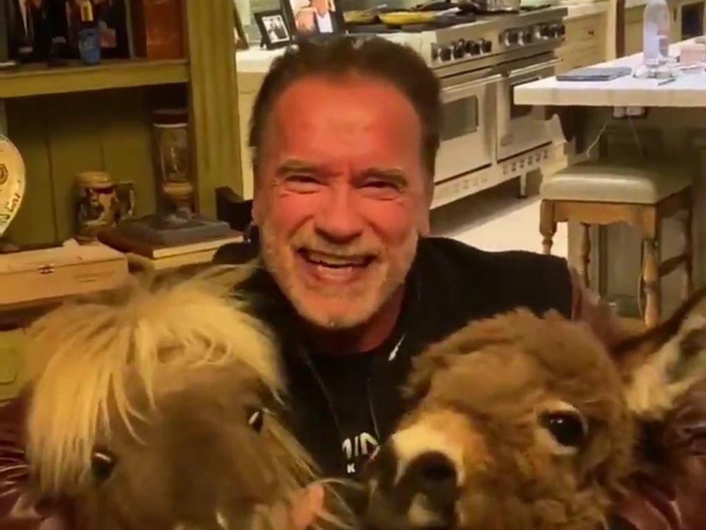 Lawan Corona! Arnold Schwarzenegger Sumbang 1 Juta USD untuk Rumah Sakit