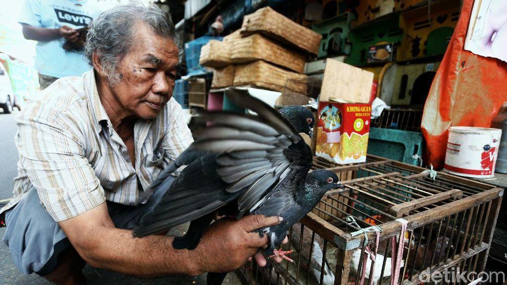 Menengok Aktivitas di Pasar Burung Pramuka