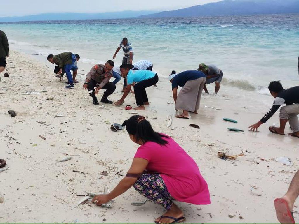Geger Banyak Ikan Laut Terdampar di Maluku Tengah, Ini Penjelasan KKP
