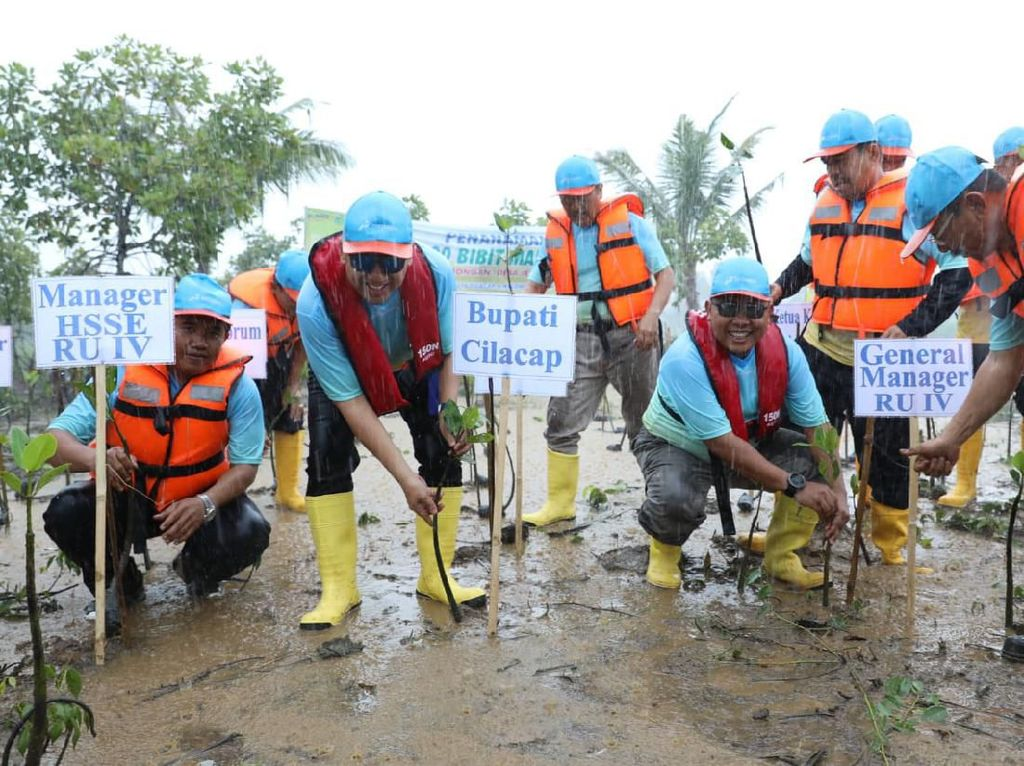 Pertamina Tanam 50.000 Bibit Mangrove di Pulau Momongan