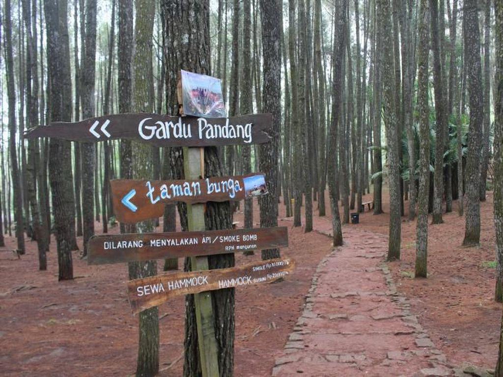 Indahnya Hutan Pinus Jogja yang Tak Pernah Membosankan
