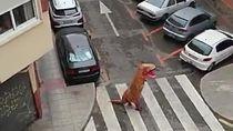 Di Tengah Wabah Corona, Pria Berkostum T-Rex Mencuri Perhatian