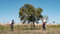 Belum Ada Warga Positif Corona, tapi Uganda Sudah Pasang Kuda-kuda
