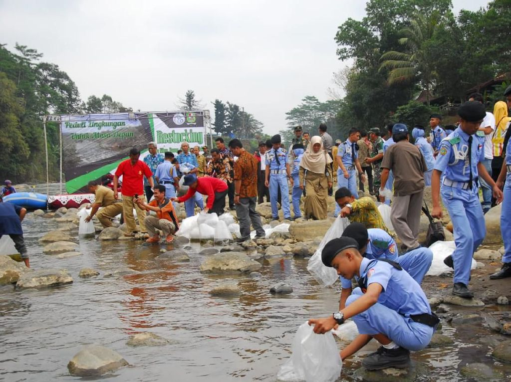 Restocking Ikan, KKP Produksi Benih Ikan Lokal Massal