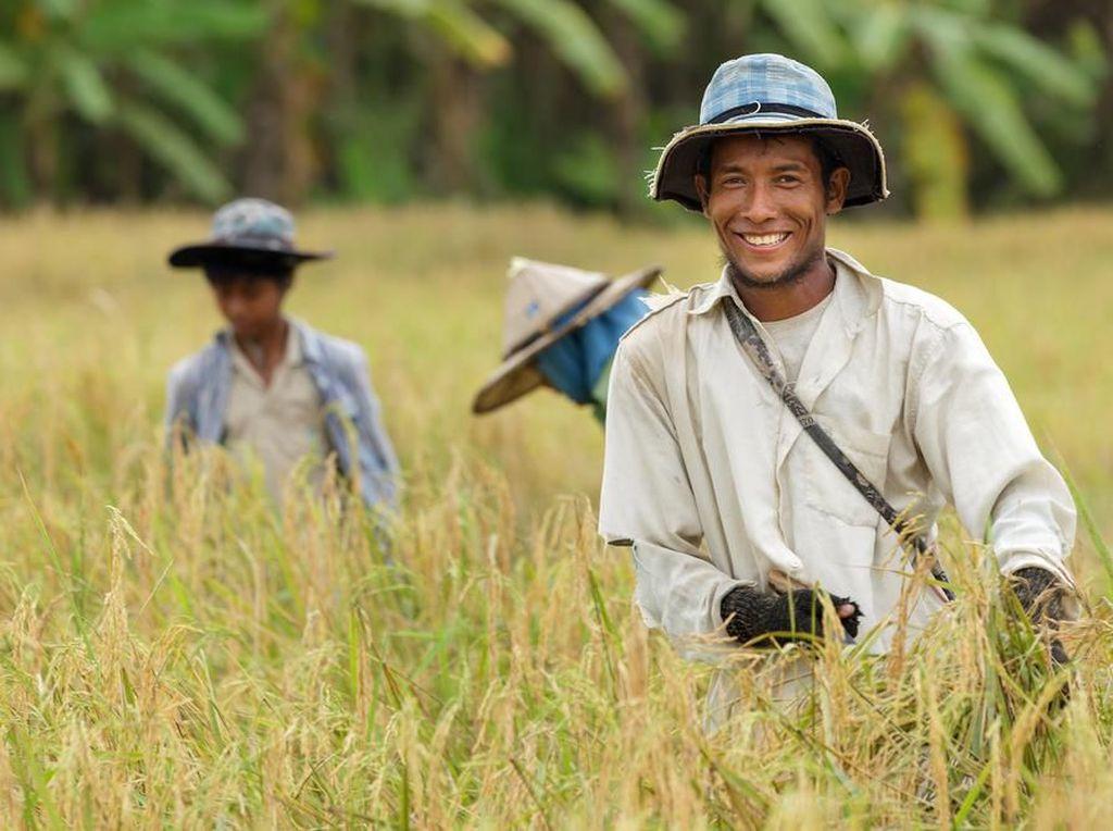 Tingkatkan Ekonomi Petani, Fokus Anggaran Kementan untuk Padat Karya