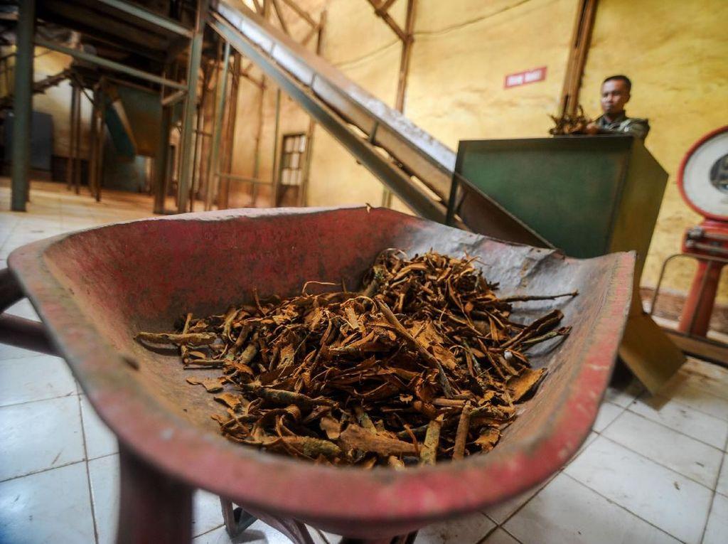 Apa Kabar Obat Kina dari Jabar untuk Sembuhkan Corona?