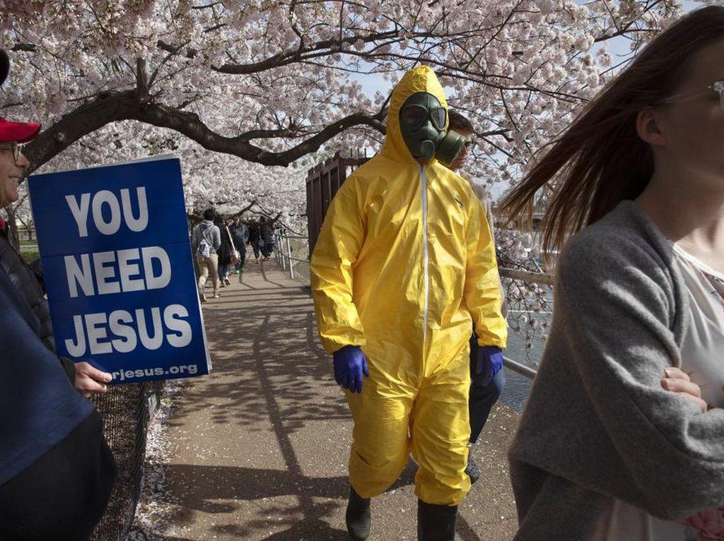 Sudah Dilarang, Warga Washington Nekat Saksikan Sakura Mekar