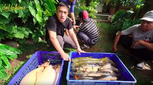 Ikan-ikan peliharaan Irfan Hakim yang mati massal