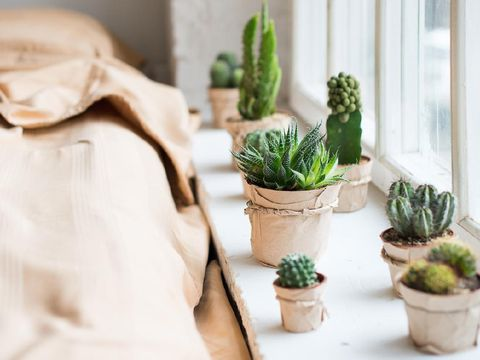Cactus in interior, window in a bed room, scandinavian style