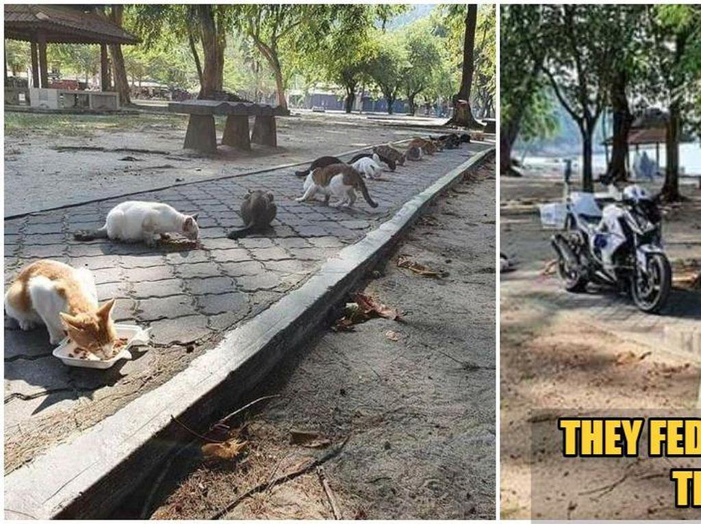 Bikin Haru, Polisi Ini Kasih Makan 20 Kucing Jalanan yang Kelaparan