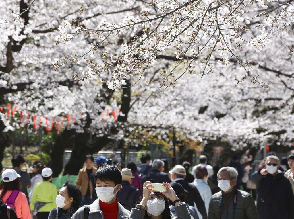 Panduan Lengkap Menikmati Bunga Sakura di Jepang, Korea Selatan dan Taiwan