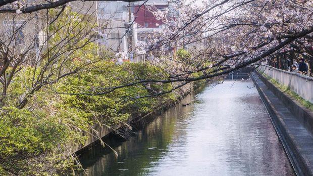 8 Kawasan Hijau Favorit Warga Tokyo