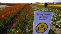 Belanda Tak Sarankan Warga Pakai Masker untuk Cegah Corona, Kenapa?