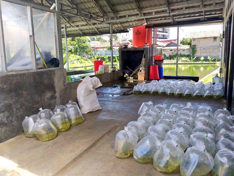KKP Minta Akses Pengiriman Logistik Perikanan Tak Dibatasi