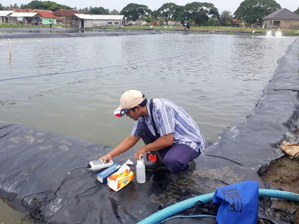 KKP Layani Pembudidaya Ikan Via Online