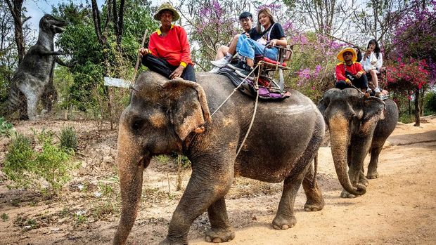 (FILES) In this file photo taken on February 12, 2020, tourists ride elephants in Chang Siam Park in Pattaya. - Underfed and chained up for endless hours, campaigners warn many elephants working in Thailand's tourism sector may starve, be sold to zoos or shifted into the illegal logging trade as the coronavirus decimates visitor numbers. (Photo by Mladen ANTONOV / AFP)