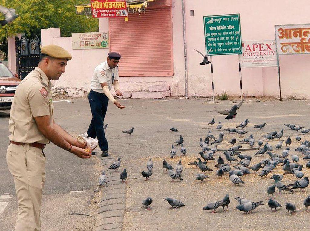 Pemerintah Jaipur Bagikan 15 Ribu Makanan untuk Hewan Liar Selama Lockdown