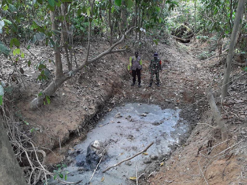 Tengkorak Gajah Betina Ditemukan di Kubangan di Aceh Timur
