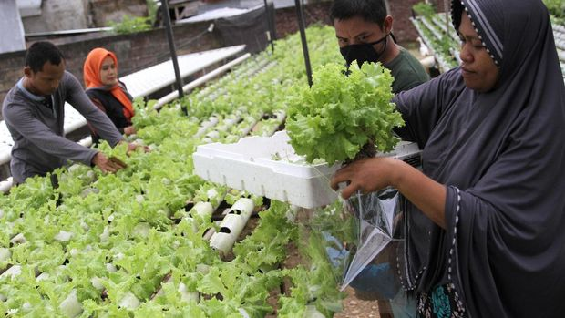 Petani sayur mayur dengan sistem hidroponik mengemas hasil pertaniannya di kawasan perkebunan Tunas Baru Hidroponik di Kecamatan Baruga, Kendari, Sulawesi Tenggara, Sabtu (4/4/2020). Sejak pemerintah menetapkan darurat kesehatan wabah COVID-19, petani mengaku penjualan sayur mayur hidroponik meningkat drastis dengan mampu meraup omzet Rp600 ribu per hari dan kebanyakan pembeli memesan melalui jasa ojek daring agar tetap tetap berada di rumah. ANTARA FOTO/Jojon/wsj.