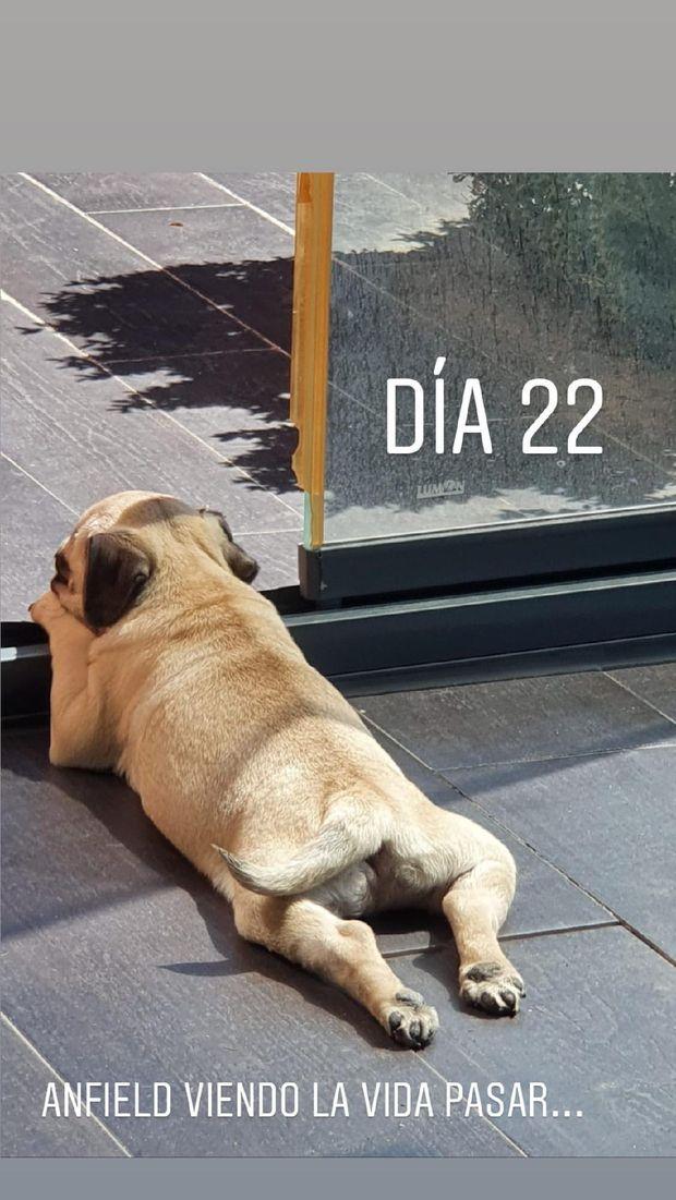 Anfeld, anjing peliharaan milik Marcos Llorente