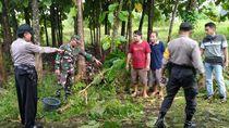 Dua Pencari Pakan Ternak Tewas Tersambar Petir di Sawah Jombang