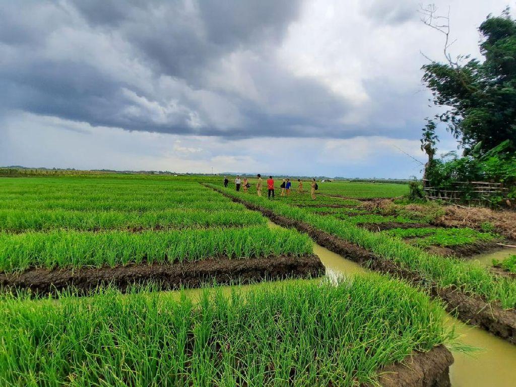 Produksi April-Mei Surplus, Stok Beras Aman sampai Ramadhan