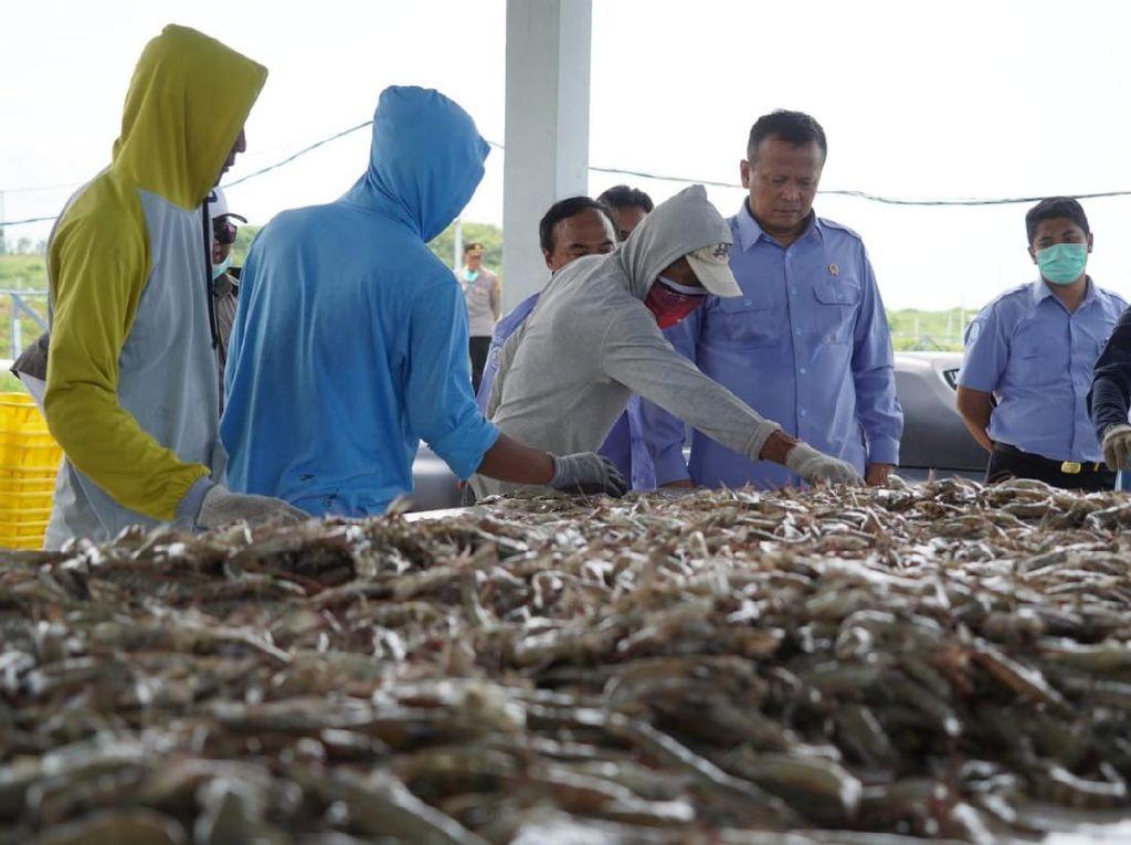 Selama COVID-19, Neraca Perdagangan Hasil Perikanan Meningkat