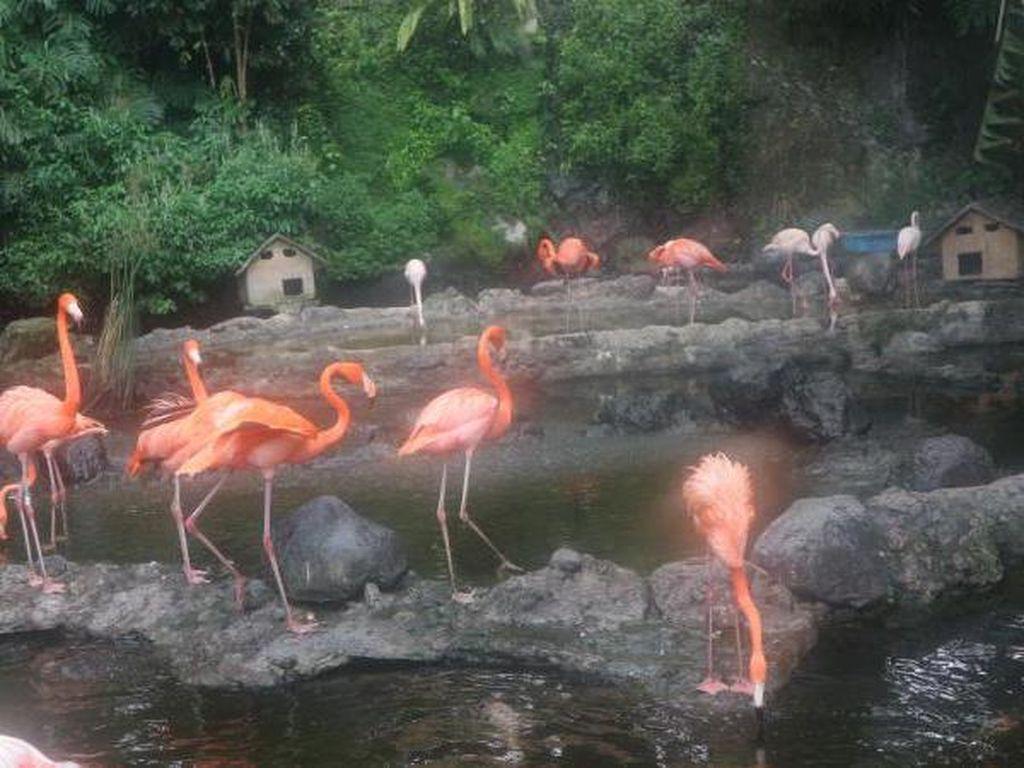 Reda Corona, Yuk Lihat Burung Flamingo di Batu Secret Zoo