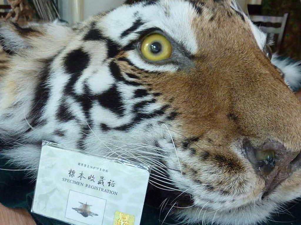 Larangan Perdagangan Daging Satwa Liar China Tidak Efektif?