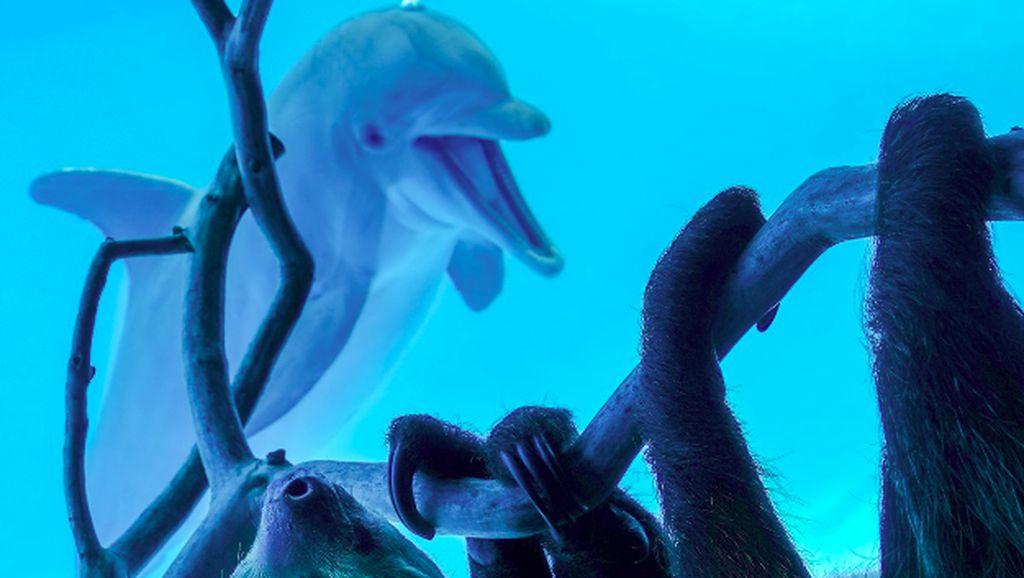 Ekspresi Girang Lumba-lumba Bertemu Kungkang