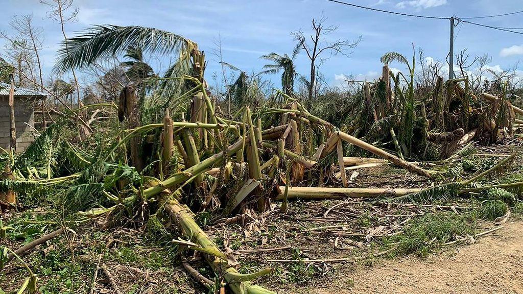 Potret Perkebunan di Vanuatu yang Rusak Diterjang Topan