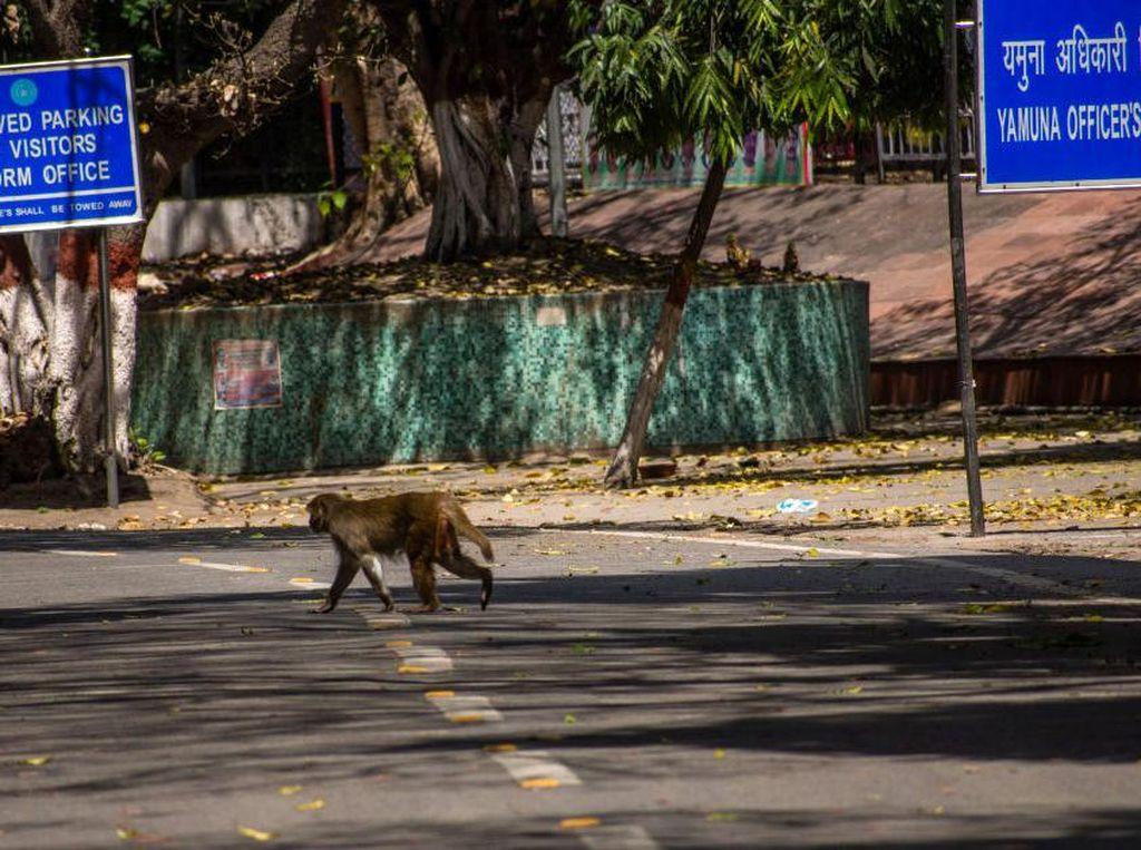 Tragis! Bayi di India Tewas Usai Dilempar Monyet dari Atap Rumah