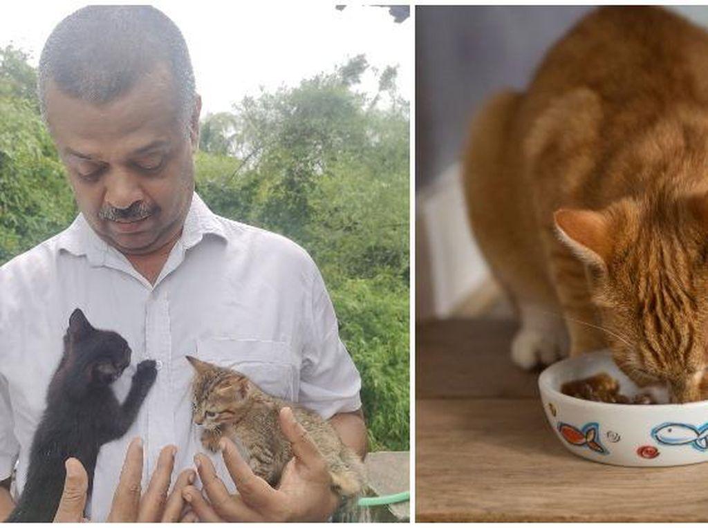 Ajukan Petisi, Pria Ini Dapat Akses Beli Biskuit Kucing Saat Lockdown