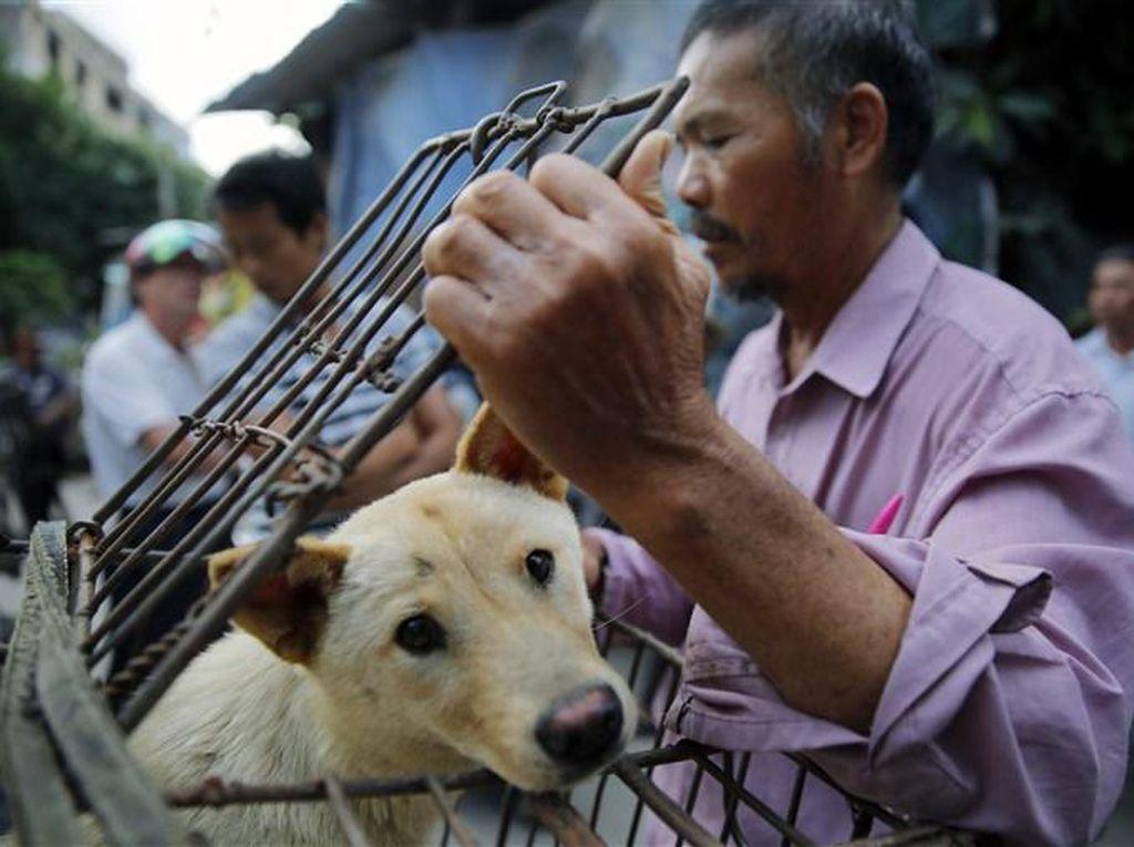 Pemerintah China Sebut Anjing Bukan Hewan Ternak Untuk Dimakan