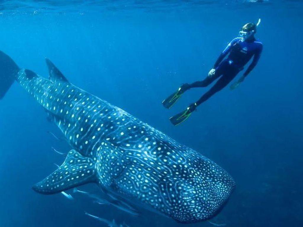 Teka-teki Umur Ikan Terbesar Dunia Terungkap Lewat Tes Bom Atom