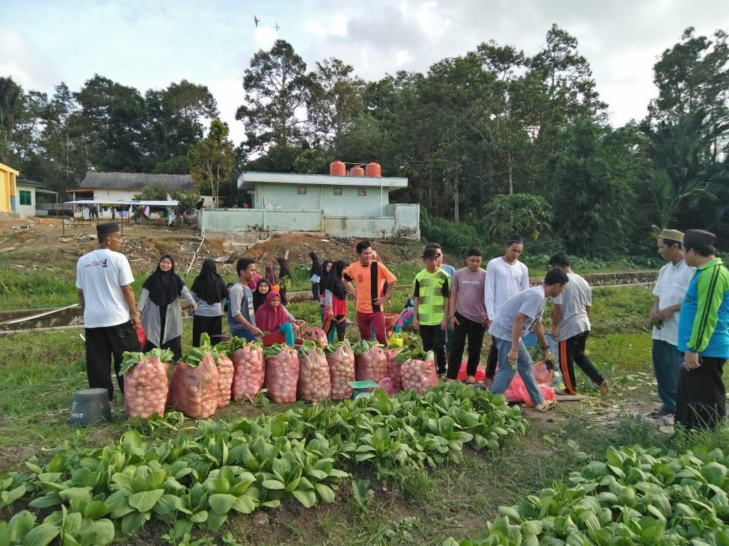 Sekolah SMA di Palembang Punya Lahan Sayuran, Kini Siap Panen