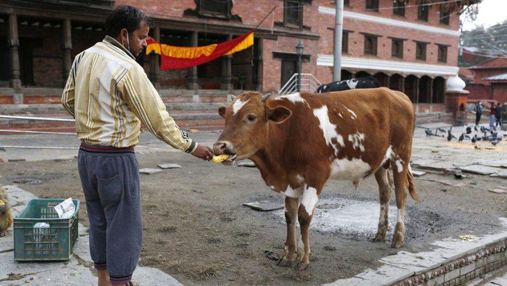 Orang Nepal Berbagi Makanan dengan Satwa yang Kelaparan Akibat Corona