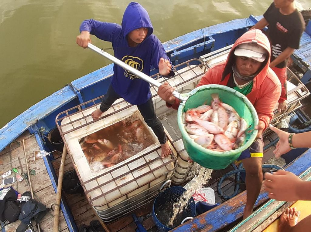 Penjualan Ikan Budi Daya Petani Keramba di Sragen Anjlok