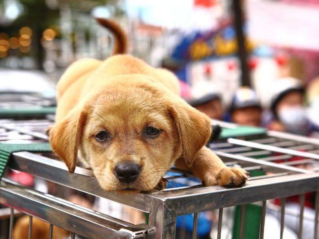 5 Negara Ini Melarang Keras Konsumsi Daging Anjing