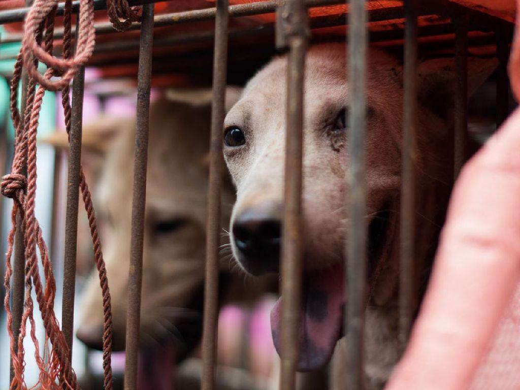 Zhuhai Jadi Kota Kedua yang Larang Konsumsi Daging Anjing dan Kucing