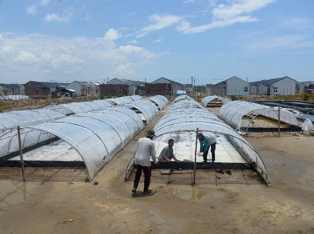 Permintaan Garam Meningkat di Ramadhan, Petani Genjot Produksi