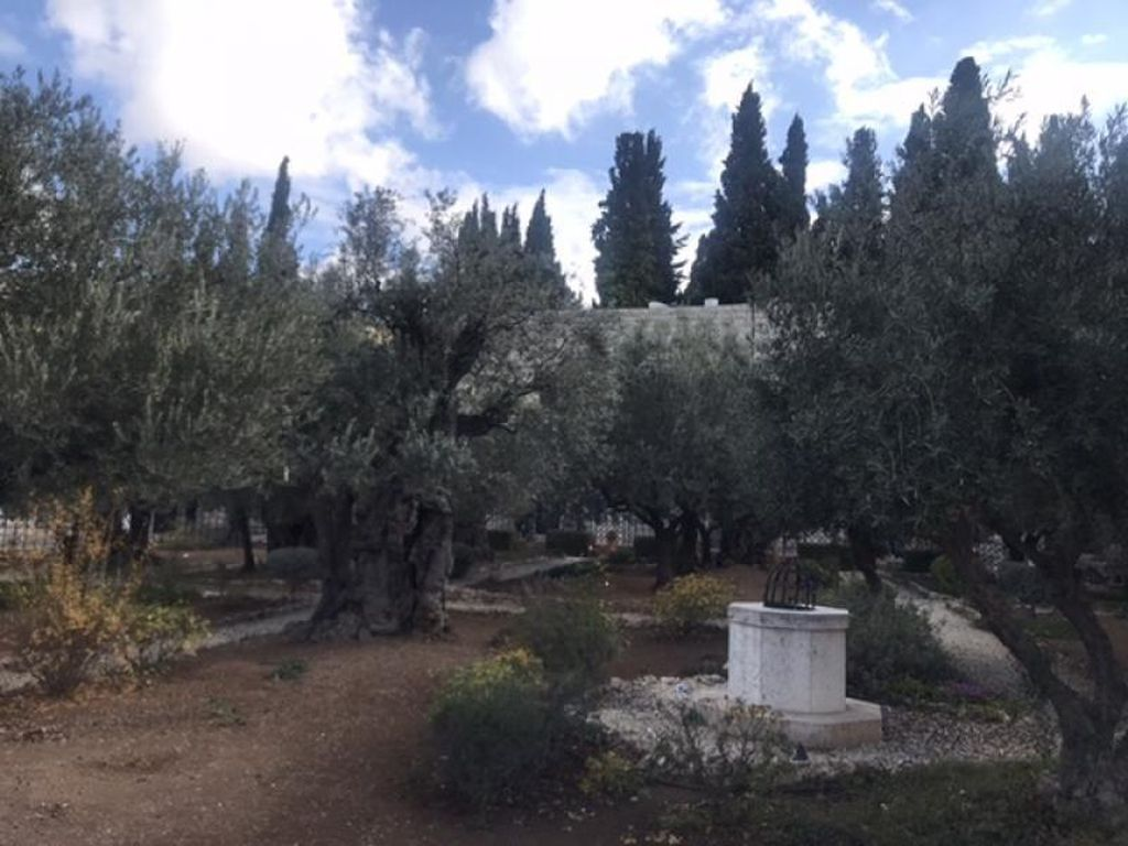 Wisata Religi di Taman Getsemani Yerusalem