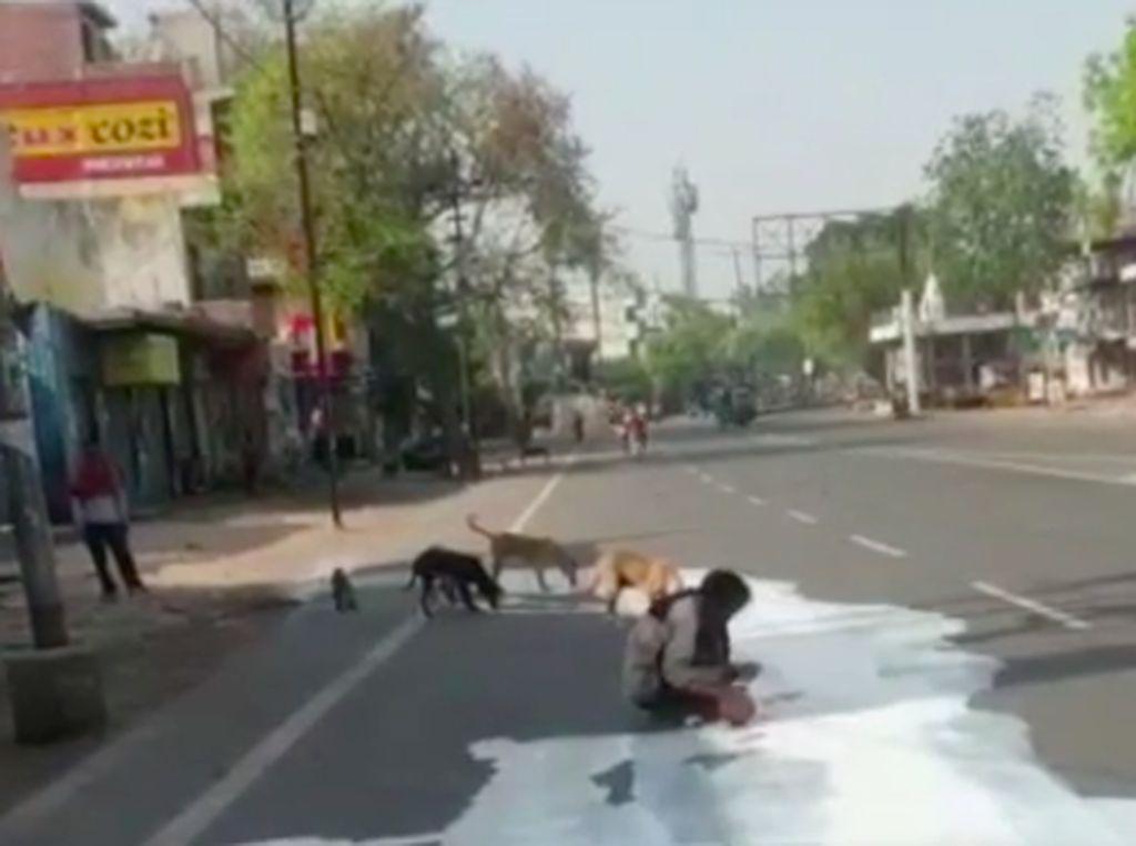 Viral! Pria India Mengais Tumpahan Susu di Jalan Bersama Anjing