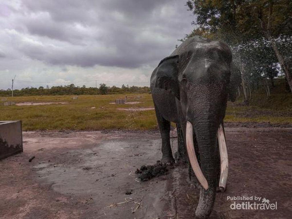 Tips Berwisata ke Taman Nasional Way Kambas Lampung
