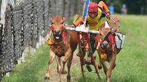 8 Kebudayaan Suku Madura yang Perlu Diketahui