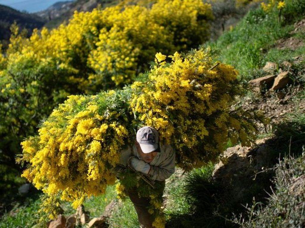 Duh! Imbas Corona dan Kekeringan, Petani Italia Terancam Gagal Panen