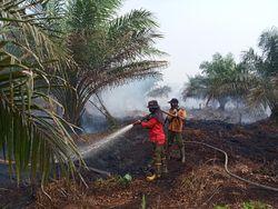 KLHK Siapkan Solusi Cegah Karhutla di Kalimantan Barat