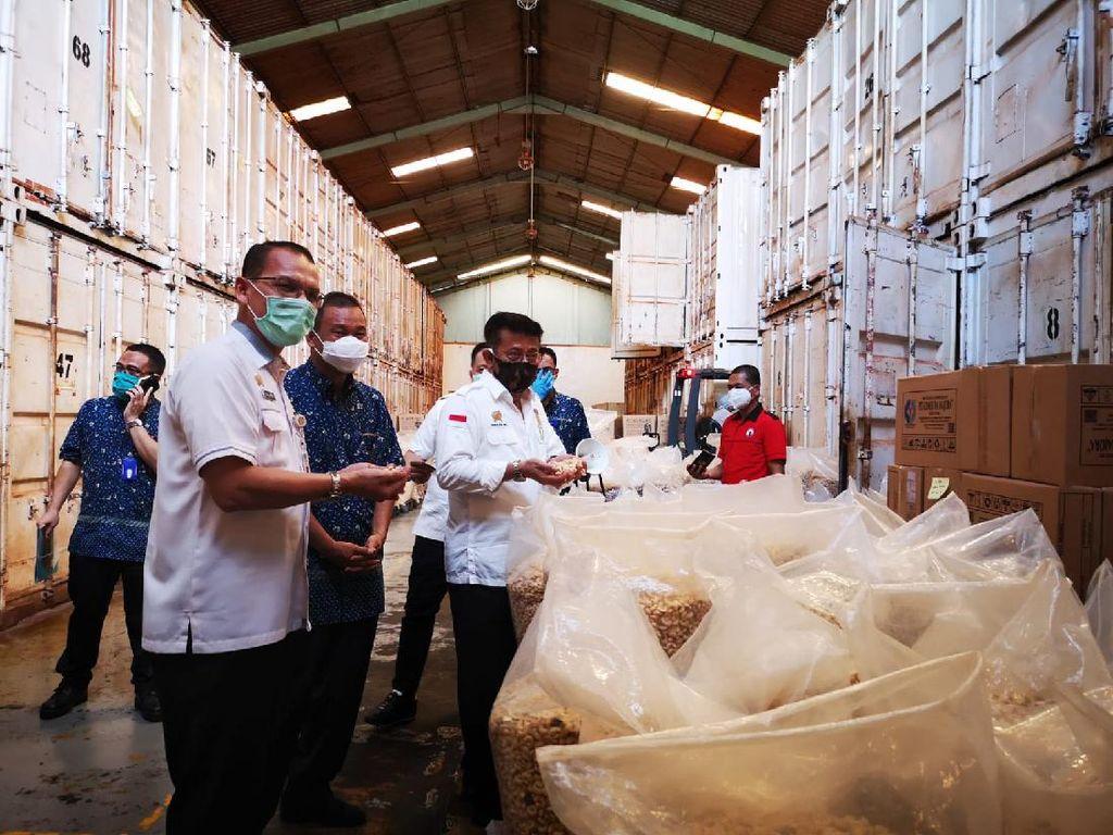Kementan Lepas Ekspor Kacang Mete Rp 23,7 M ke Eropa dan AS